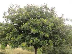 Thérapie Brève arbre, Thérapie de Couple arbre , Psychologue, Veronika Heidinger, Cabinet de Psychothérapie Bordeaux,